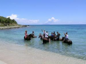 Horses in the sea with guests
