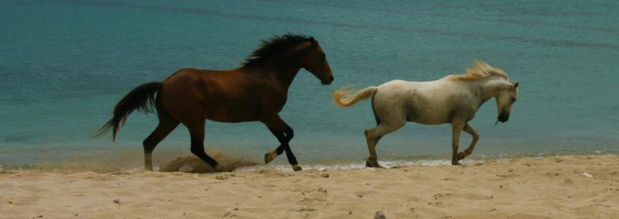 two horses running along the beach